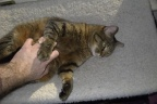 Casey cat getting her bellie rub.