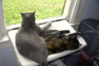 Liam and Sweetie sharing the window seat